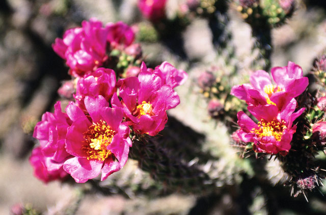 Desert blooms in the spring
